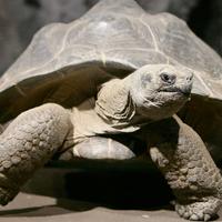 tortoise, slow, steady, sales, slowest, delist